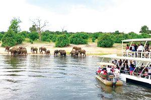 Nhờ động vật hoang dã để thu hút khách du lịch