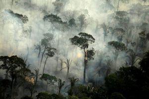 Cứ 6 giây, một khu rừng mưa nguyên sinh lớn ngang sân bóng bị phá hủy