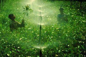 Cần Thơ: Sản xuất nông nghiệp xanh bằng công nghệ cao