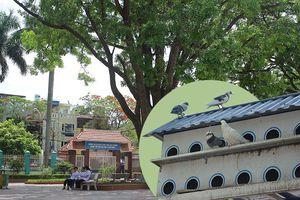 Có 1 ngôi trường xanh mướt như resort nằm giữa trung tâm TP Cảng