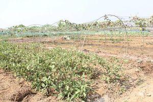 Nam Trung Bộ: Chủ động ứng phó với khô hạn kéo dài