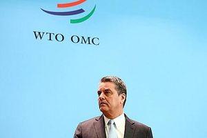 Vai trò Tổng giám đốc WTO: 5 lý do cho vị trí 'ghế nóng'