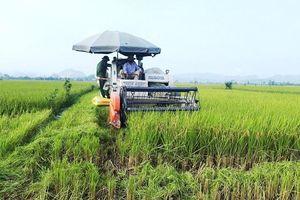 Phát triển bền vững vùng lúa hàng hóa