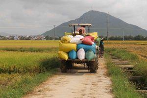 Cà Mau: Thương lái nợ hơn 1,3 tỷ đồng tiền lúa của bà con nông dân