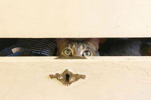 Đố bạn tìm ra chú mèo nấp trên kệ sách trong vòng 10 giây