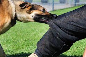Chó cắn người, chủ phải chịu trách nhiệm