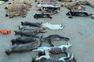 Khởi tố băng trộm nửa tấn chó, mèo bằng cyanua