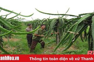 Thôn nghèo miền núi thành điển hình phát triển sản xuất trong xây dựng nông thôn mới