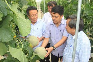 Đề xuất phát triển dự án nông nghiệp công nghệ cao quy mô 5.000ha tại Quảng Trị