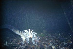 Phát hiện nhiều giống thú hiếm tại Vườn Quốc gia Bidoup-Núi Bà