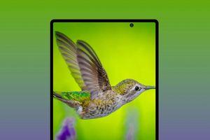 Samsung Galaxy Fold 2 đạt chứng nhận 3C, sẽ ra mắt vào ngày 5/8