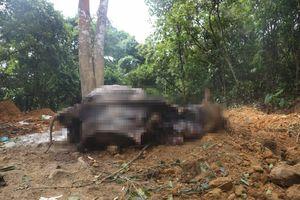 Công an vào cuộc vụ cả đàn trâu đang khỏe mạnh bỗng chết hàng loạt ở Hà Nội