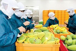 39 mặt hàng của Việt Nam được EU bảo hộ chỉ dẫn địa lý