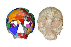 Phát hiện hộp sọ có niên đại cổ xưa nhất ngoài châu Phi