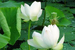 Pháp thân của chư Phật