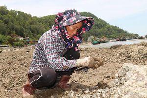 Cận cảnh nghề cạy hàu dưới nắng thiêu của phụ nữ làng biển