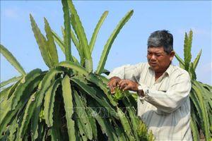 Ứng dụng công nghệ cao vào nông nghiệp - Bài cuối: Thúc đẩy liên kết sản xuất