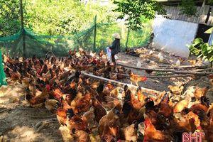 Hà Tĩnh: Làm giàu từ vùng đất đồi hoang hóa