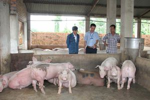 Tái cơ cấu ngành chăn nuôi còn nhiều nút thắt