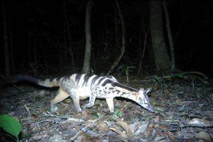 Phát hiện kho báu đa dạng sinh học cần được bảo tồn tại Kon Tum