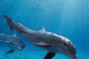 Nga đưa 'biệt đội cá heo' đến Syria nhằm mục đích gì?