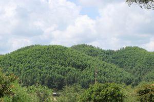 Đắk Nông: Dùng vốn vay trồng rừng sản xuất liệu có sai nguyên tắc?