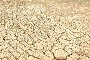 Khẩn trương cứu lúa trước đợt nóng kéo dài