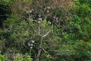 Kon Tum: Phát hiện 'kho tàng' đa dạng sinh học ở Kon Plông