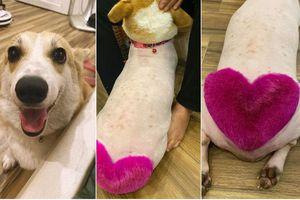 Chú chó 'thả thính' dân mạng bằng vòng 3 núng nính được 'chạm khắc' trái tim hồng tình yêu