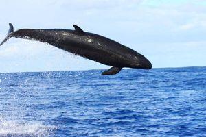 Trung Quốc nói đã phát hiện 11 loài cá voi ở Biển Đông