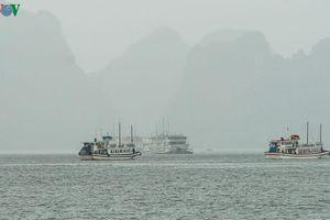 Tạm dừng cấp phép tàu tham quan, lưu trú trên vịnh Hạ Long