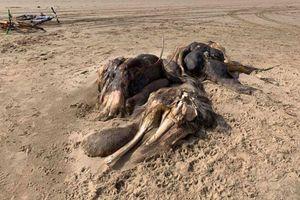 Xác 'quái vật' bí ẩn 4,5m trôi dạt vào bờ biển
