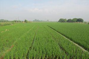 Xử lý rơm rạ sau thu hoạch bằng chế phẩm vi sinh