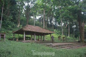 Kỳ lạ rừng lim trăm tuổi của người Cao Lan