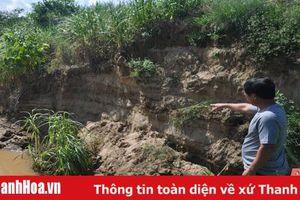 Xã Vĩnh Yên (huyện Vĩnh Lộc): Bờ sông sạt lở, ảnh hưởng đất canh tác