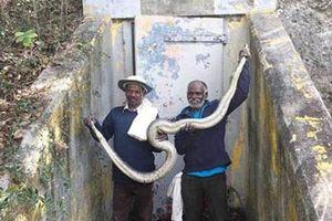 Một bộ tộc Ấn Độ săn bắt rắn khổng lồ ở Florida