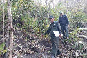 Kon Tum: Doanh nghiệp nợ 9,7 tỷ đồng tiền dịch vụ môi trường rừng