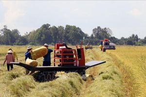 Kiên Giang phục hồi sản xuất nông nghiệp sau thiên tai, dịch bệnh