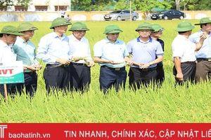 Sản xuất lúa theo tiêu chuẩn hữu cơ gắn với sản phẩm OCOP cho kết quả khả quan