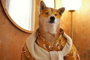 3 chú chó là mẫu thời trang nổi tiếng