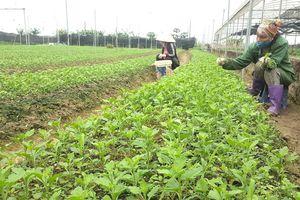 Phát triển hệ thống truy xuất nguồn gốc nông sản