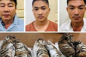 552 vụ án về động vật hoang dã bị xử lý hình sự trong 5 năm