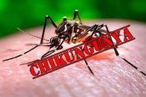 Bệnh do vi rút Chikungunya, trẻ em và người già có nguy cơ mắc