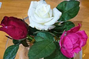 Ý nghĩa của bông hồng cài áo trong ngày lễ Vu lan báo hiếu