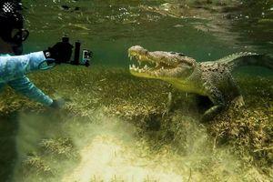 Thợ lặn chạm trán cá sấu dài 3 m