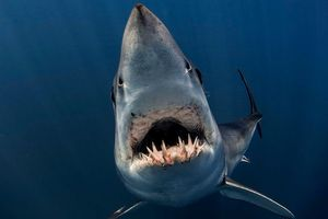 Các tác phẩm giành chiến thắng cuộc thi nhiếp ảnh dưới nước