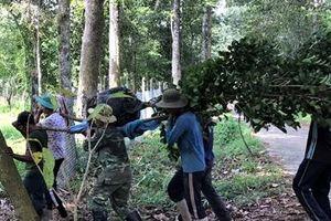 Khu bảo tồn gen Trà hoa vàng 'độc nhất vô nhị' Việt Nam