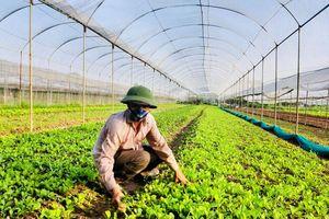 Ngành Nông nghiệp Hà Nội: Đẩy mạnh tăng trưởng xanh