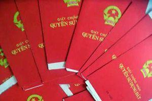 Xã Ninh Phước: Cấp 'sổ đỏ' đất lâm nghiệp sai đối tượng