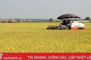 Xây dựng chuỗi sản phẩm OCOP lúa gạo hữu cơ thương hiệu Hà Tĩnh
